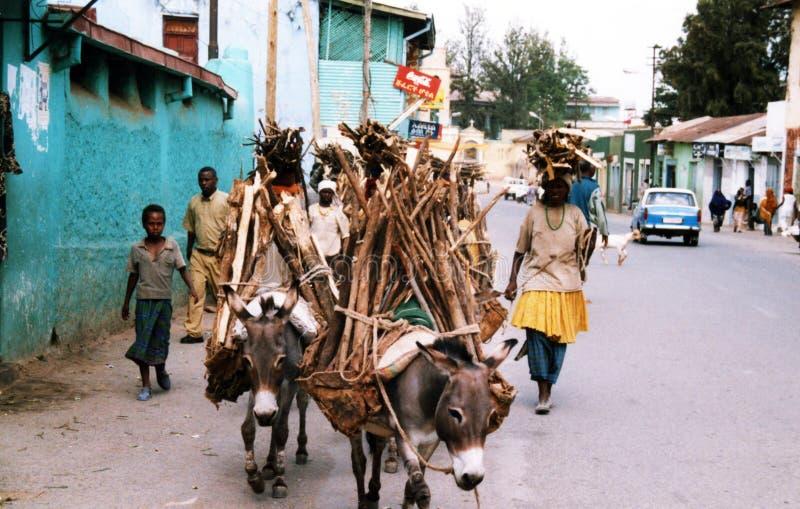 Download Caravan di Harar Jugol fotografia editoriale. Immagine di etiopia - 56885582