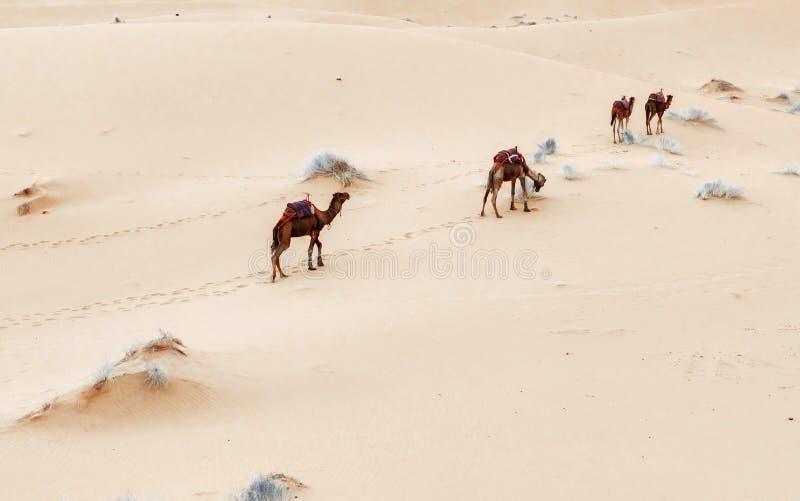 Caravan die door de zandduinen gaan in Sahara Desert stock foto's