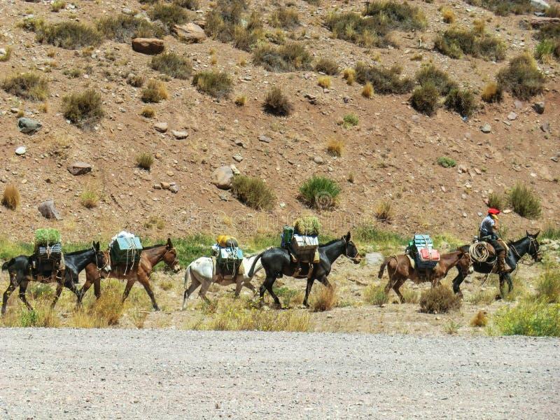 Caravan die van muilezels koopwaar tussen Chili en Argentinië dragen royalty-vrije stock afbeeldingen