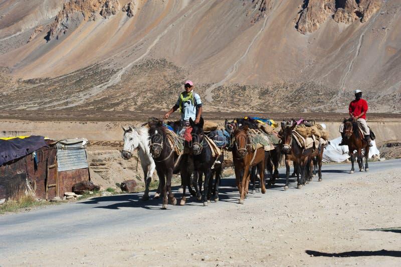 Caravan himalayano dei cavalli dei cavi dei mandriani fotografia stock