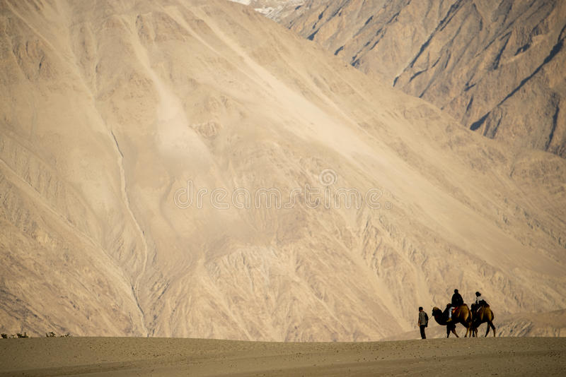 Caravan travellers riding camels Nubra Valley Ladakh ,India. September 2014 royalty free stock image