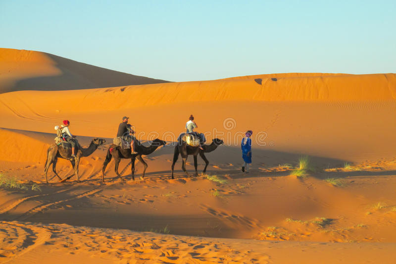 Caravan turistico del cammello in dune del deserto della sabbia dell'Africa fotografia stock