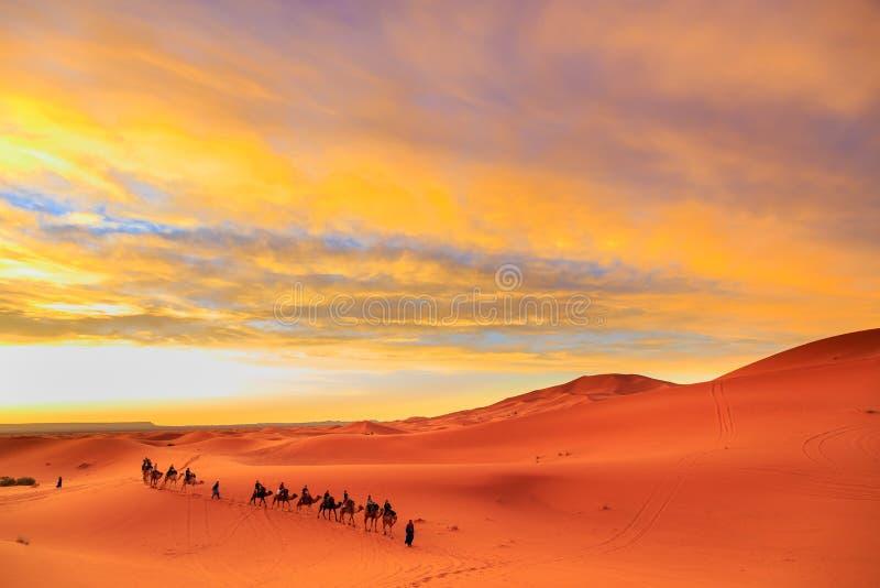 Caravan van kamelen met toerist in de woestijn bij zonsondergang tegen a royalty-vrije stock foto's