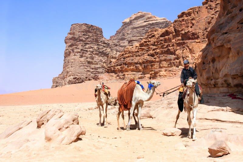 Caravan van kamelen in Wadi Rum-woestijn, Jordanië stock fotografie