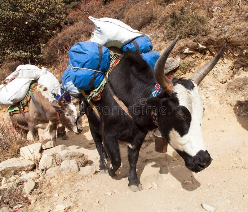 Caravan van yaks - de bergen van Nepal Himalayagebergte stock foto's