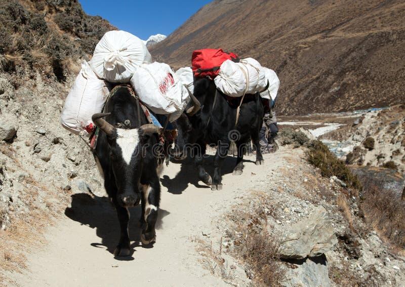 Caravan van yaks - de bergen van Nepal Himalayagebergte stock afbeelding