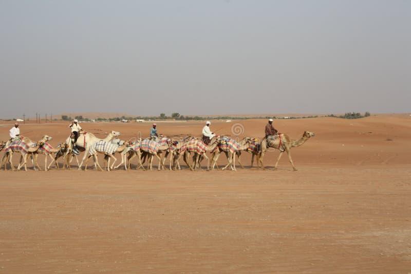 Caravana com beduínos e camelos em dunas de areia no deserto no por do sol imagem de stock