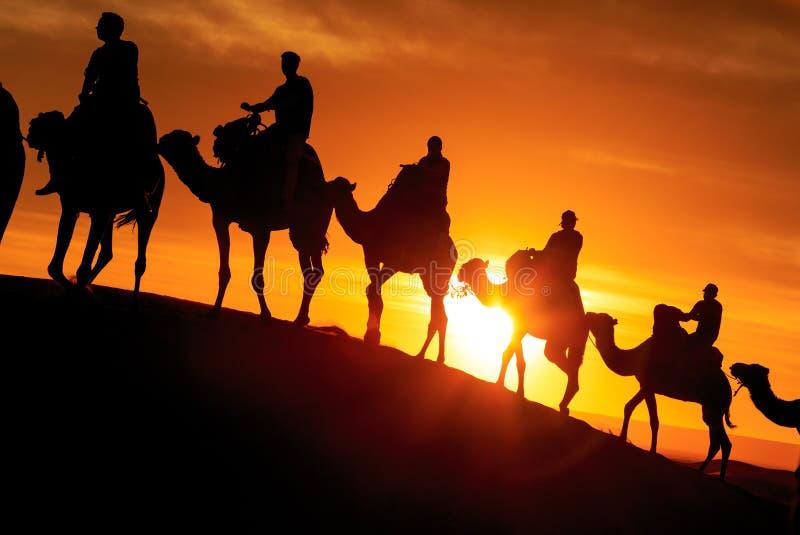 Caravana de camellos con el turista en el desierto en la puesta del sol foto de archivo