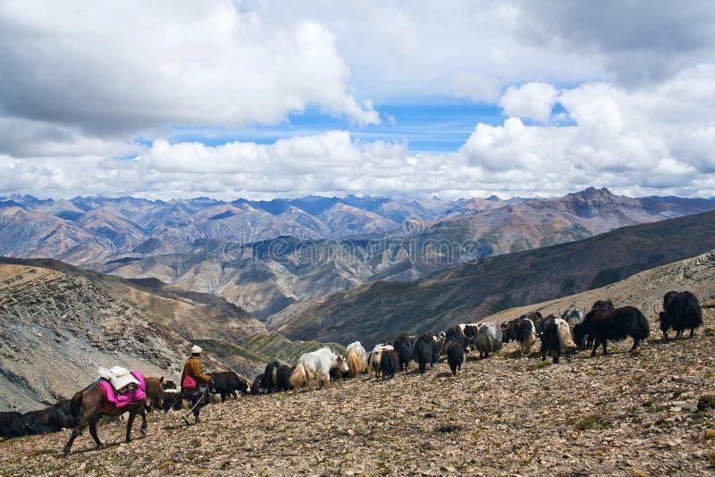 Caravana de yaks imagen de archivo