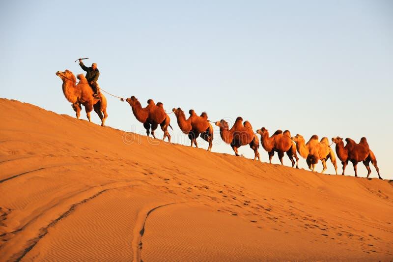 Caravana del camello en el desierto fotografía de archivo libre de regalías