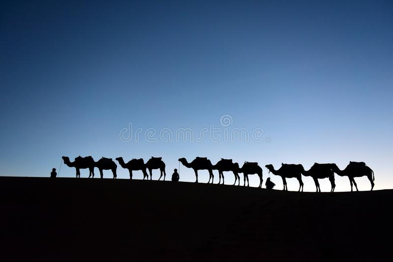Caravana del camello en Sahara Desert, marroquí fotos de archivo libres de regalías