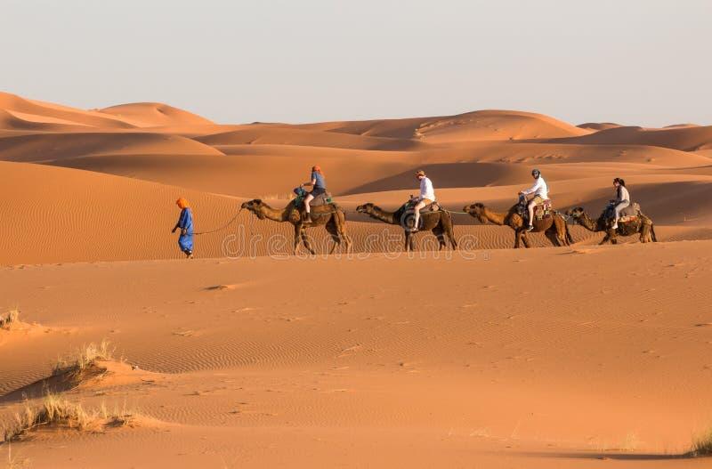 Caravana del camello que pasa a través de las dunas de arena en Sahara Desert Marruecos África Dunas de arena hermosas en el Sáha foto de archivo