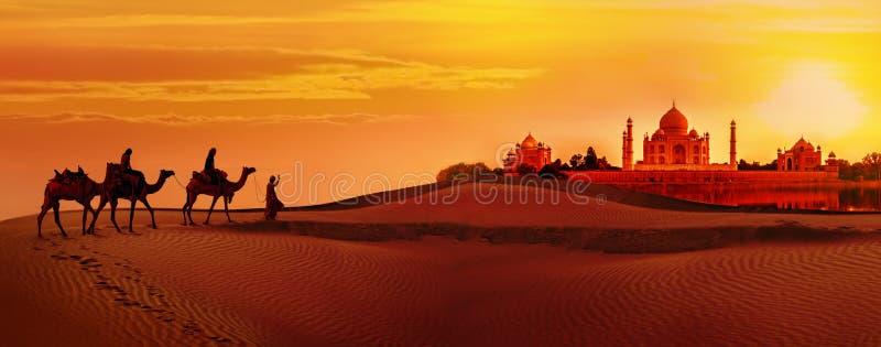 Caravana del camello que pasa a través del desierto Taj Mahal durante puesta del sol imagenes de archivo