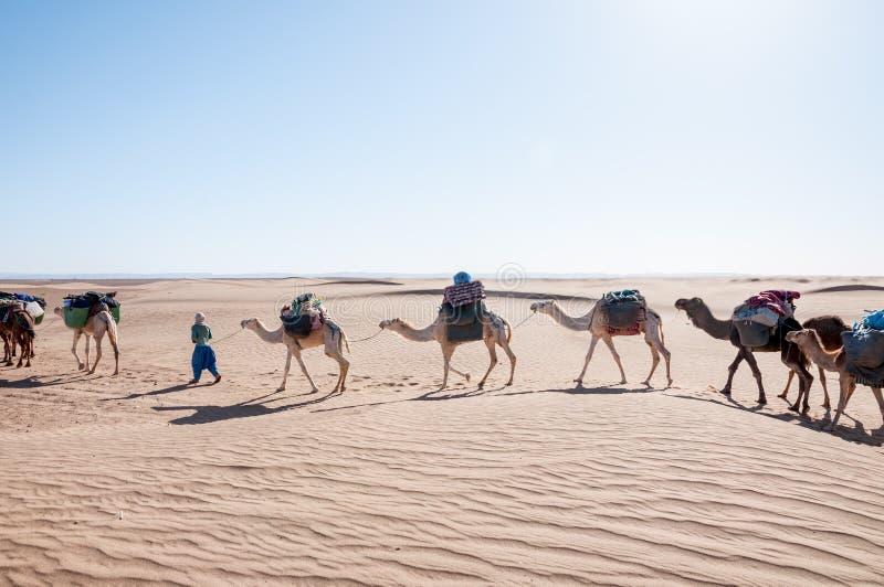 Caravana del dromedario, Hamada du Draa (Marruecos) foto de archivo libre de regalías