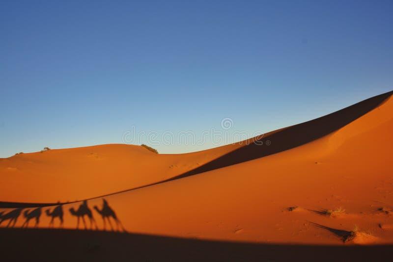 Caravana do camelo do deserto foto de stock royalty free
