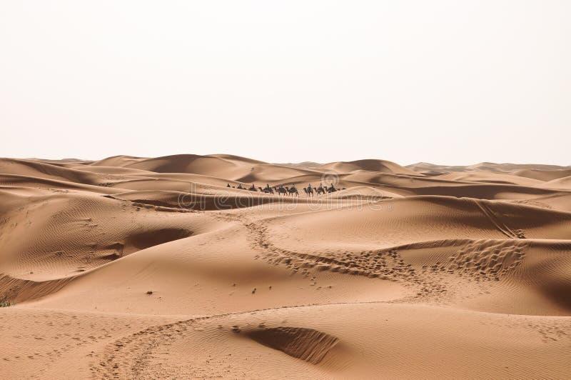 A caravana do CAMELO imagem de stock