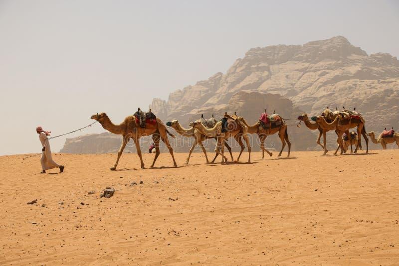 Caravana dos camelos no deserto de Wadi Rum em Jordânia wi do Motorista-berber imagem de stock royalty free