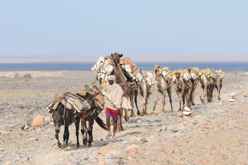 Caravana etíope de la sal imágenes de archivo libres de regalías