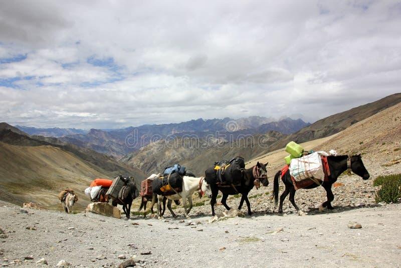Caravana Himalaia do cavalo fotos de stock royalty free
