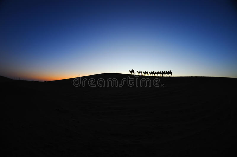 Caravane de chameau dans l'aube de désert image stock