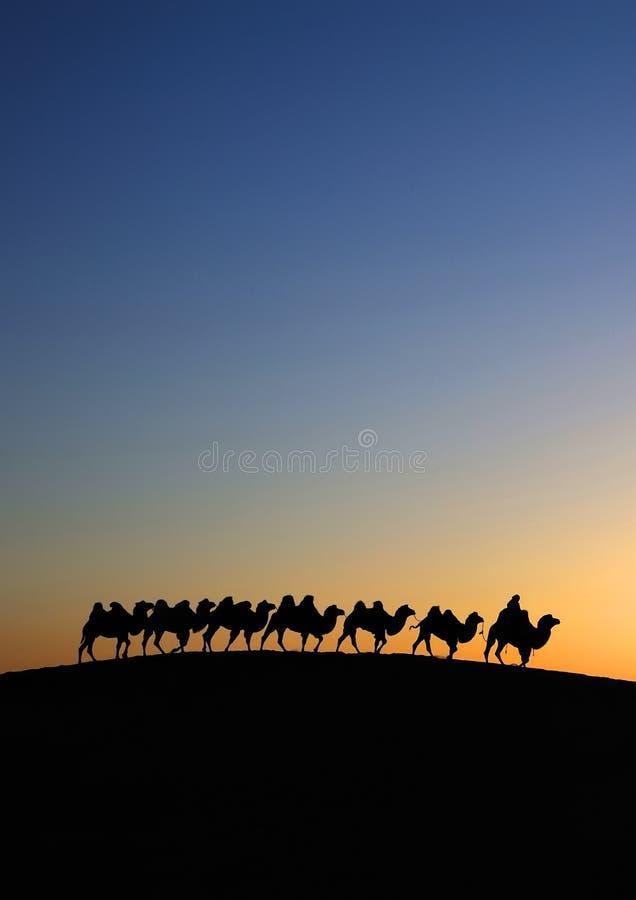 Caravane de chameau dans l'aube de désert photos stock