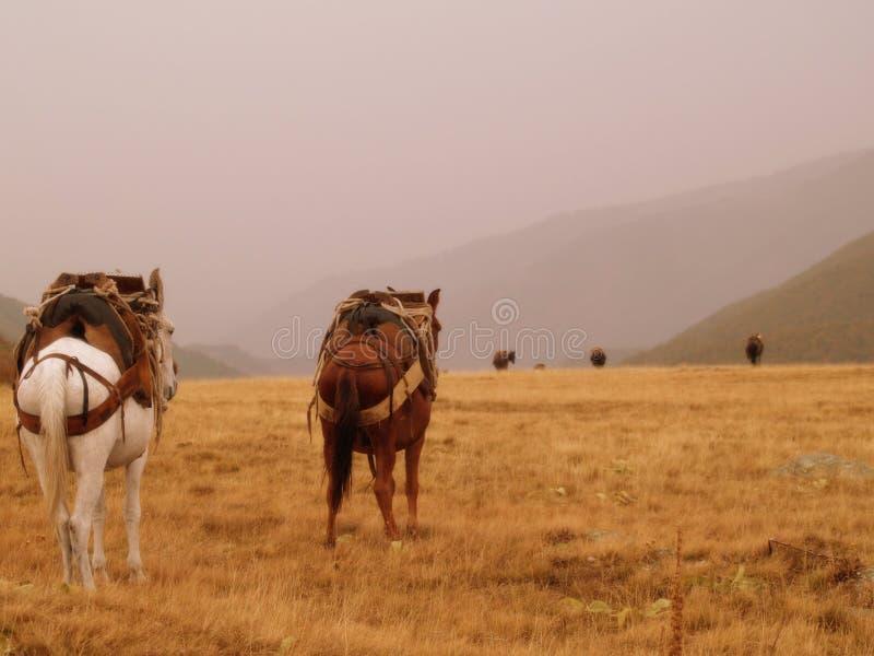 Caravane de mule en Grèce image libre de droits