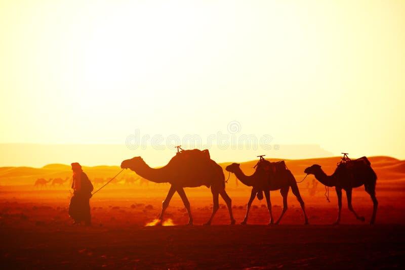 Caravane des chameaux dans le désert du Sahara, Maroc image libre de droits