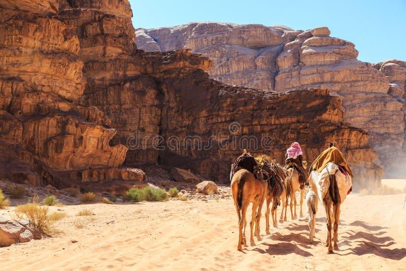 Caravane des chameaux marchant dans le désert de Wadi Rum en Jordanie image stock