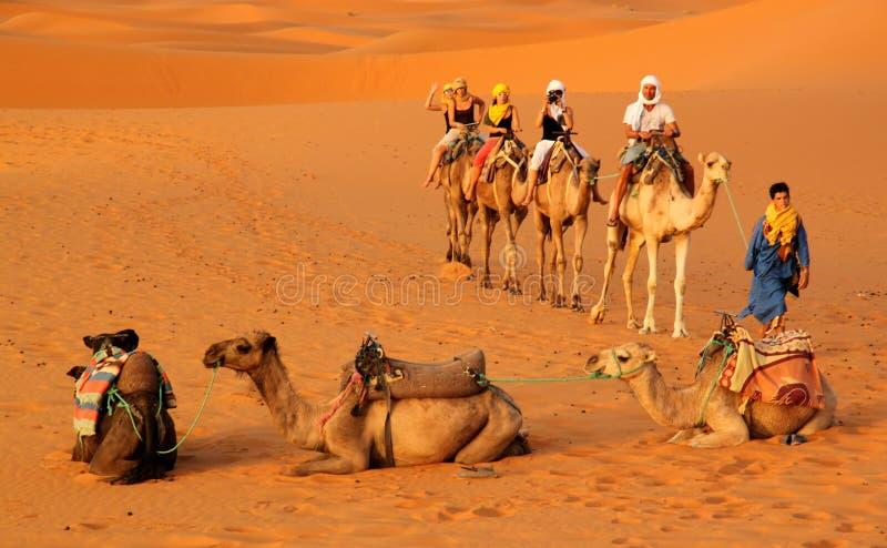 Caravane parmi les dunes de sable photos libres de droits