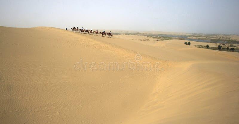Caravans In Deserts Stock Images