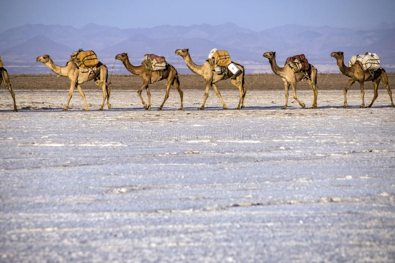 Caravans die zoute blokken van Meer Assale vervoeren royalty-vrije stock fotografie
