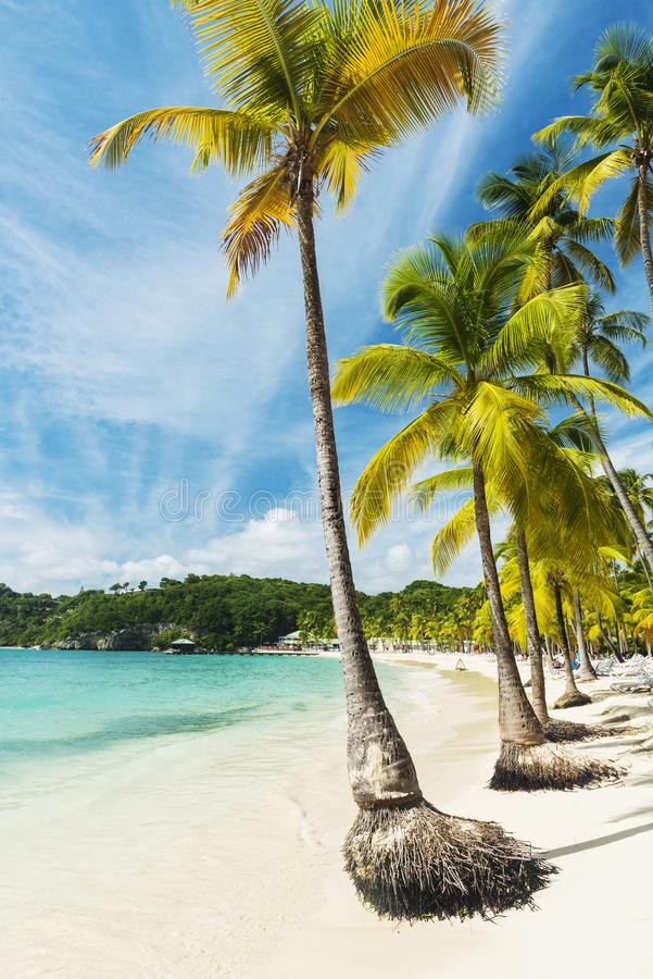 Caravelle beach in Guadeloupe royalty free stock photography