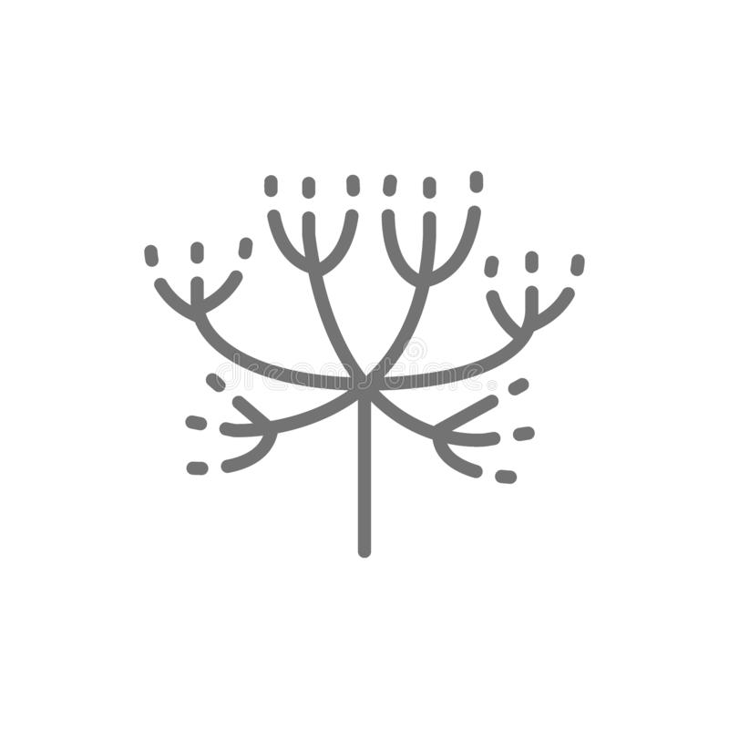 Caraway, dill line icon. vector illustration