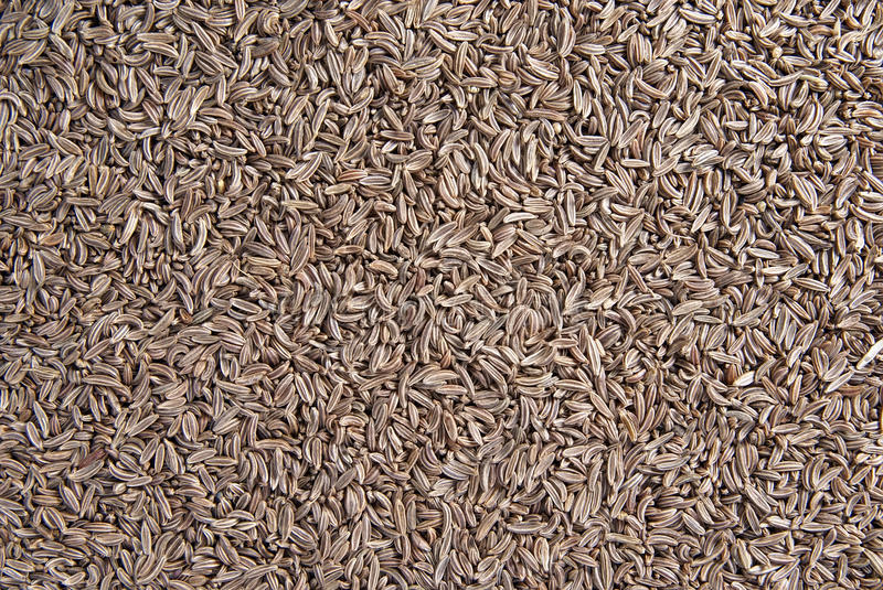 Download Caraway seeds stock photo. Image of dried, textured, caraway - 23745224