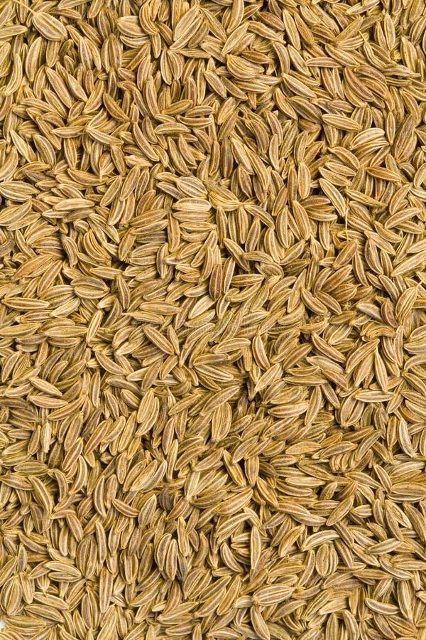 Free Caraway Seeds Stock Image - 8679781