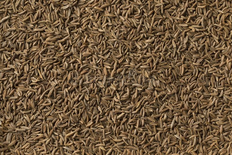 Caraway seeds full frame stock images
