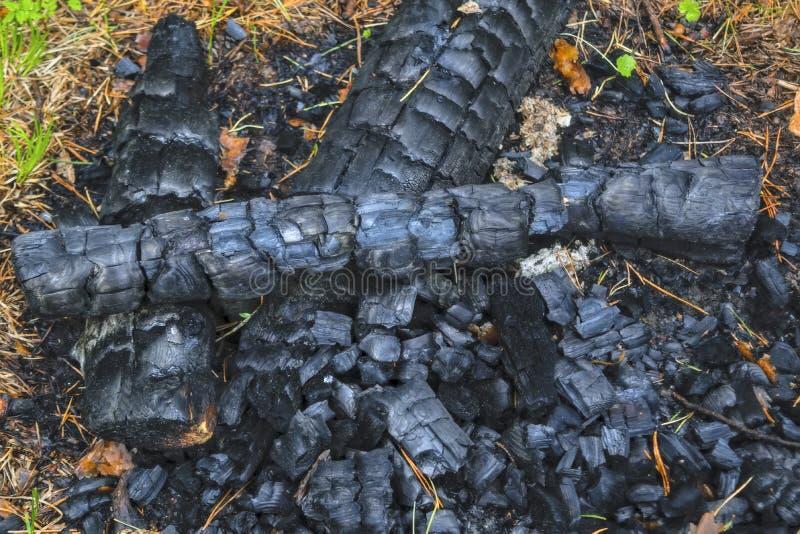 Carbón de leña de un fuego extinto en el primer del bosque imágenes de archivo libres de regalías