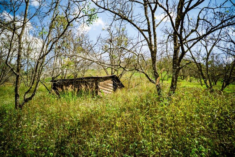 carbin в древесине стоковые фотографии rf