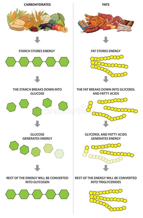 Carbohidratos y grasas ilustración del vector