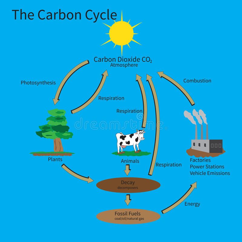 The Carbon Cycle. Showing how carbon is recycled in the environment vector illustration