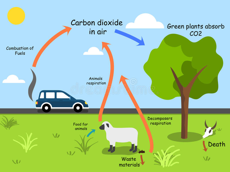 Carbon cycle schematic diagram stock vector illustration of plants download carbon cycle schematic diagram stock vector illustration of plants nature 83180033 ccuart Image collections