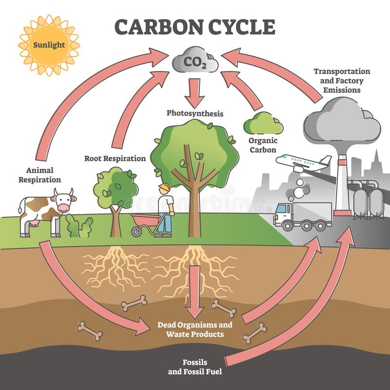 Free Carbon Cycle With CO2 Dioxide Gas Exchange Process Scheme Outline Concept Stock Image - 210304181