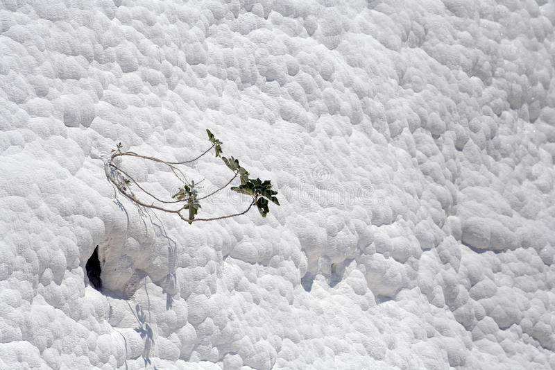 Carbonate wall in Pamukkale, Turkey stock photo