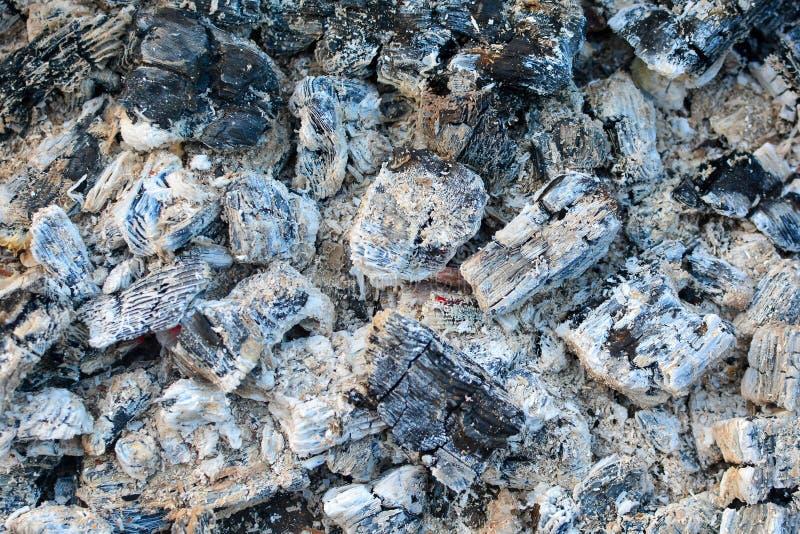 Carboni caldi coperti in ceneri Fondo dopo fuoco bruciante fotografia stock