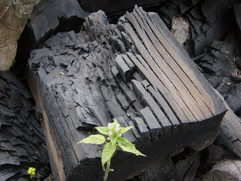 Carbonización del carbón imagen de archivo libre de regalías