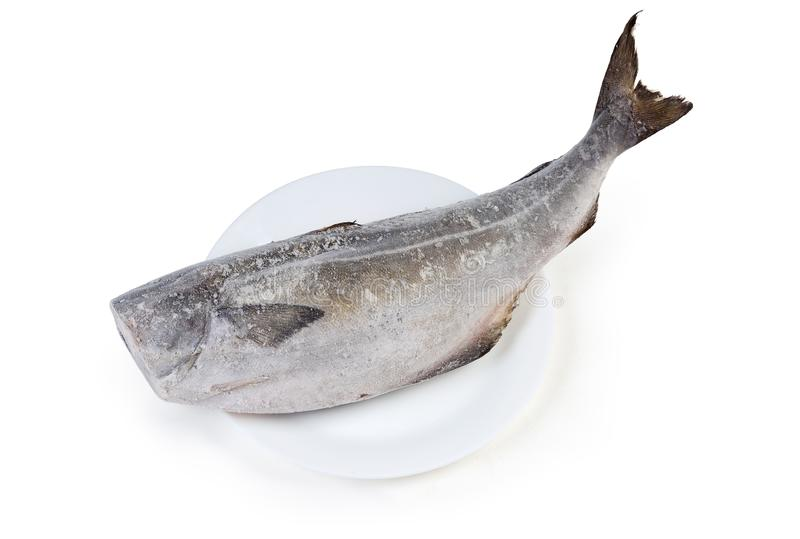 Carcass of frozen saithe without head on a white background. Frozen carcass of saithe, also known as coalfish without head on dish on a white background stock photography