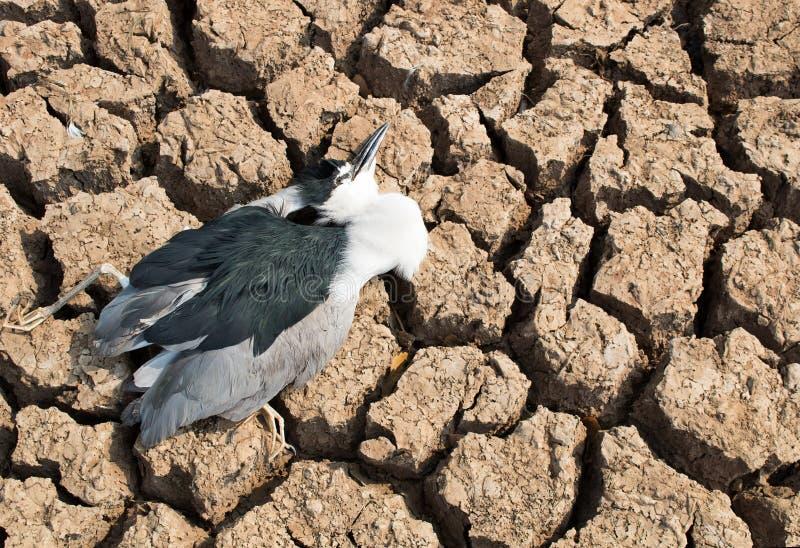 Carcasse d'oiseau image libre de droits
