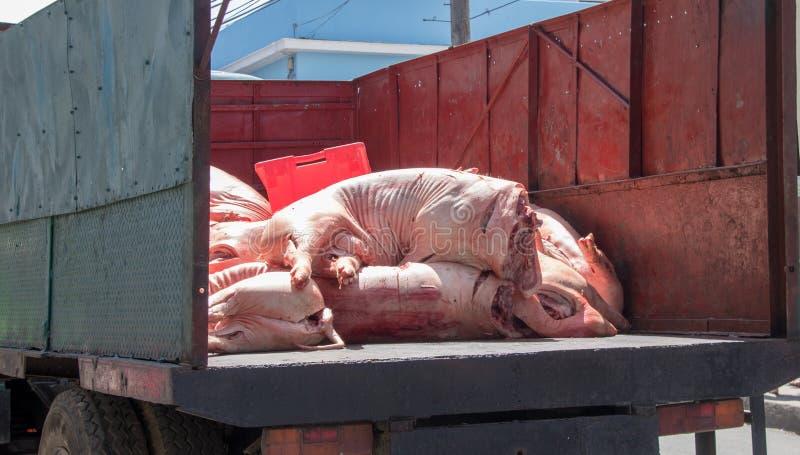 Carcasses de porc au dos d'un camion images libres de droits