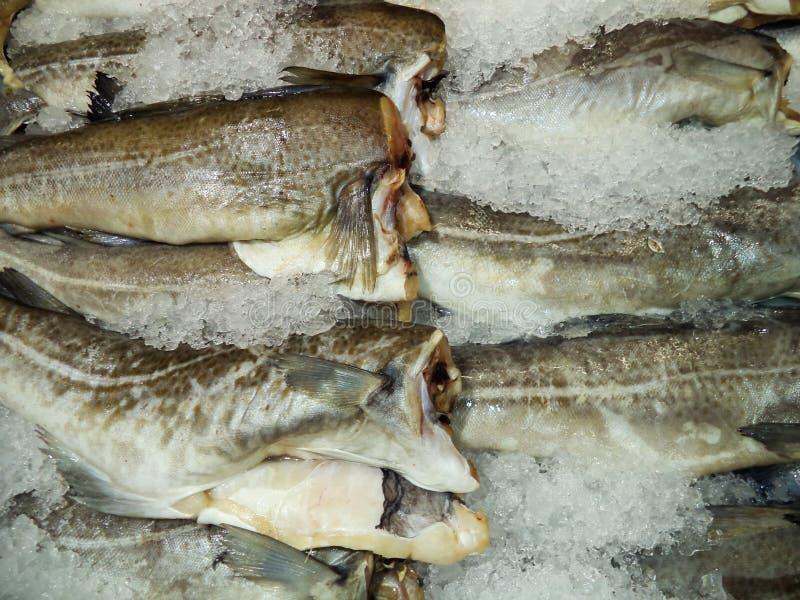 carcasses Frais-congelées de la morue photo libre de droits