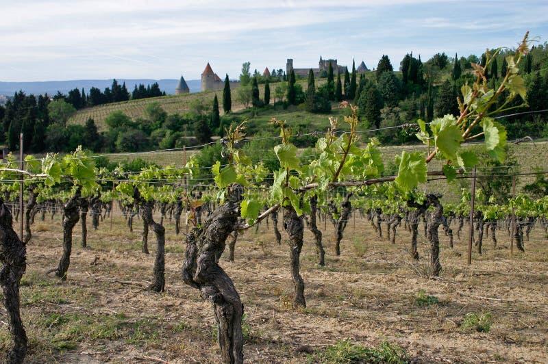 Carcassonne en wineyard stock afbeelding